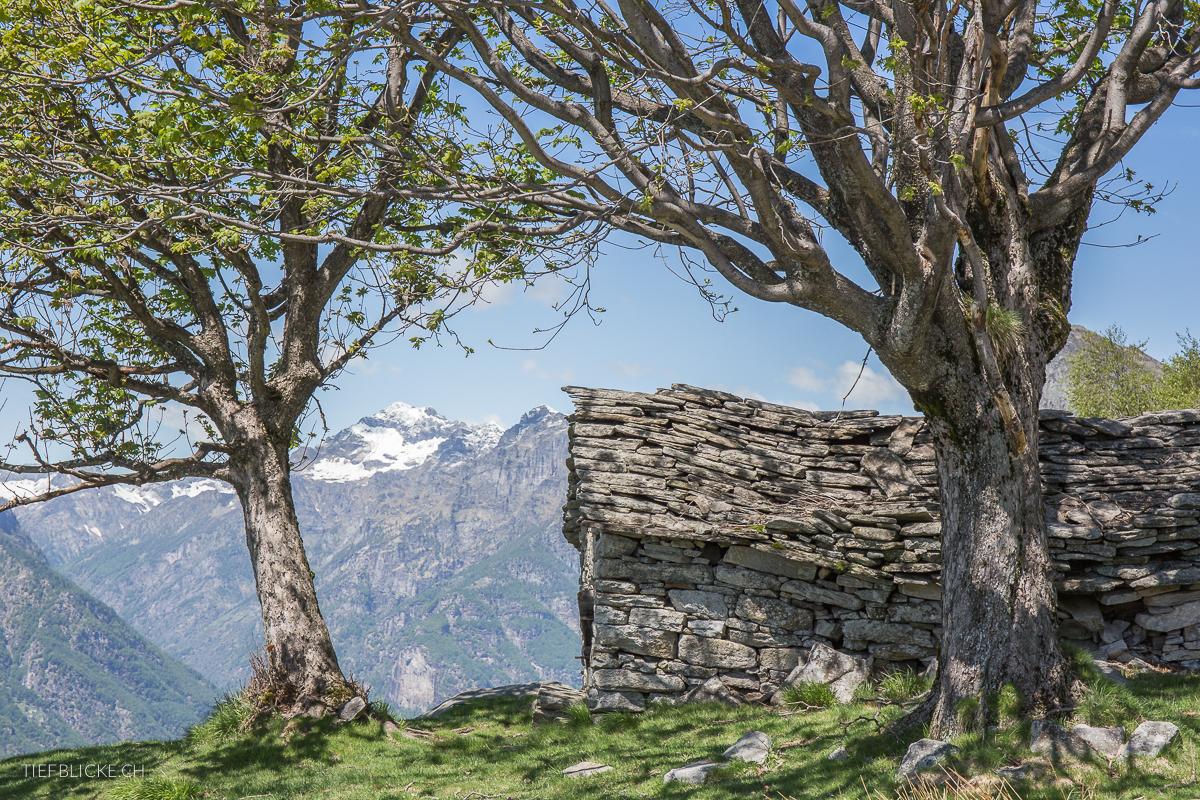 Alpe Viciüm