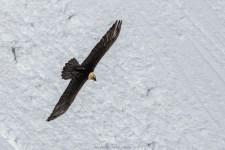 Flügelspannweite bis zu 3 Meter