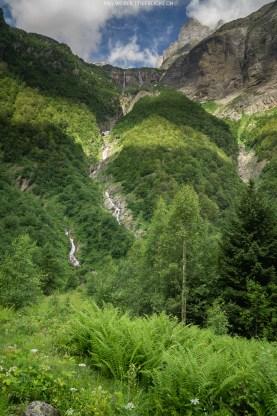 Swiss Jungle
