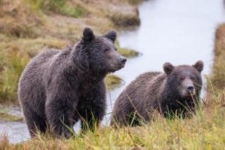 Bärenbrüder (Alaska)
