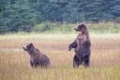 Stand up! (Alaska)