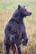 Aufmerksame Bärenmutter