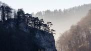 Bäume im Jura