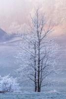 Baum im Reifkleid
