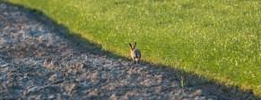 Frühling bei den Hasen