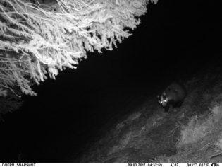 Mit Hilfe der Wildcam habe ich den Dachsbau gefunden...
