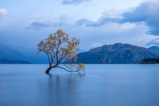 Wanka Tree Blue Hour