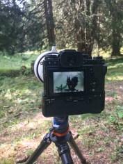 Im Einsatz Tierfotografie
