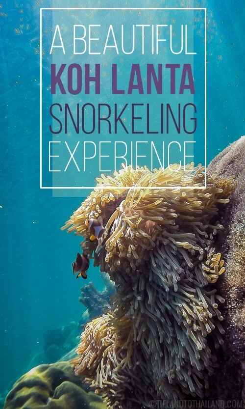 Koh Lanta snorkeling is actualyl best at the tiny neighboring island of Koh Rok. The fish and coral are gorgeous! | Tieland to Thailand