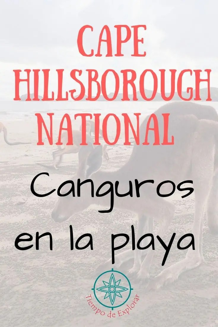 Cape Hillsborough National Park canguros en la playa