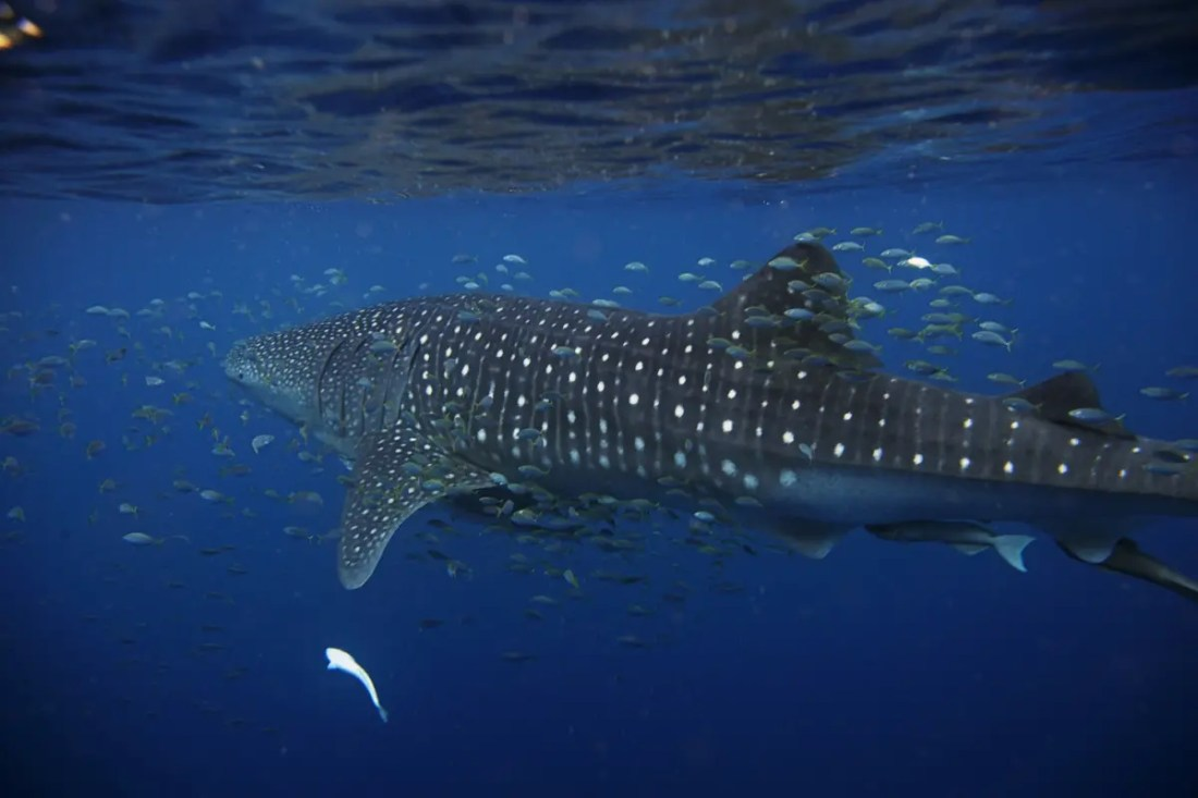 Excursión Ningaloo Reef