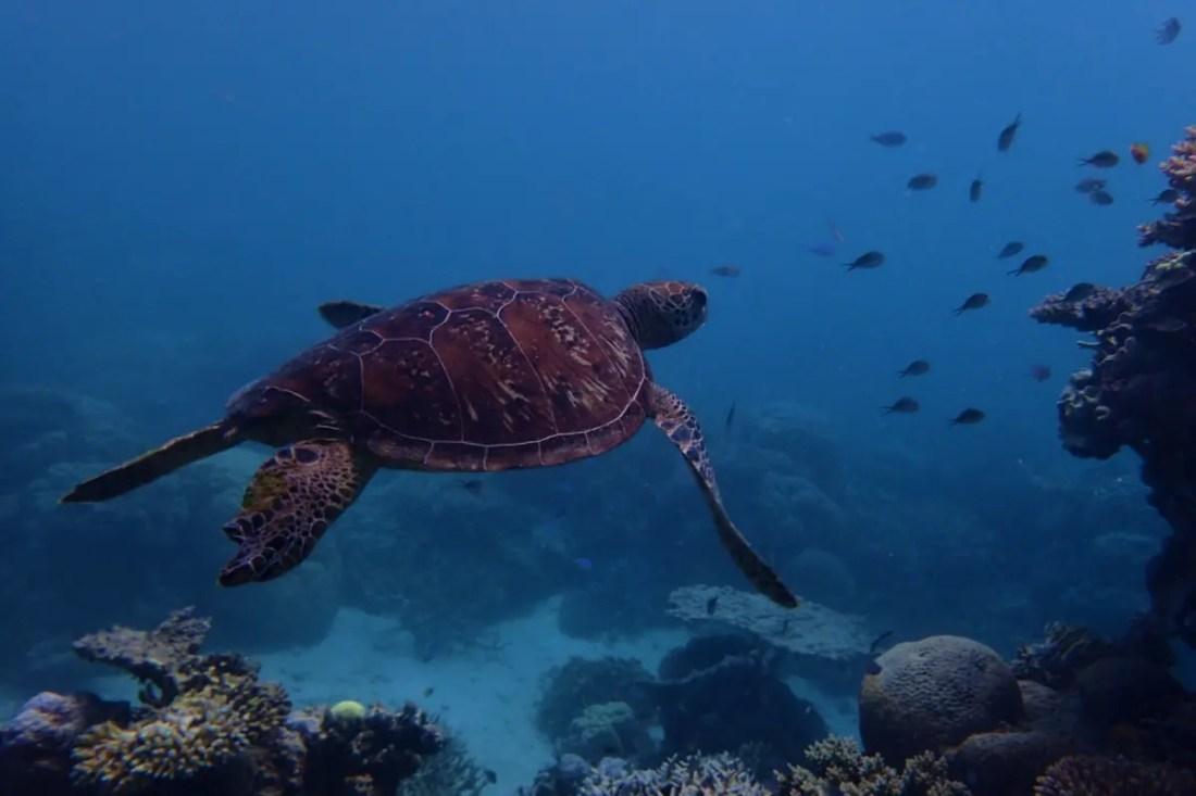 Gran Barrera de Coral. Iconos de Australia