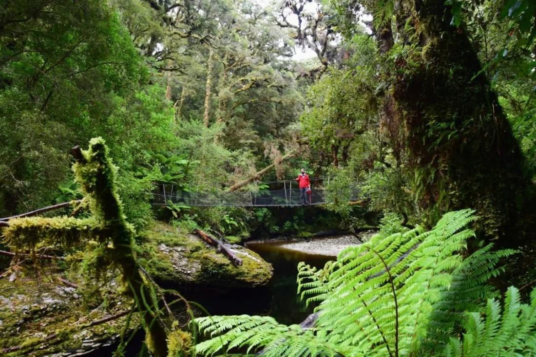 Oparara Basin que hacer en la isla sur de Nueva Zelanda