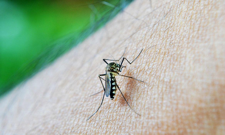 erupciones en la piel por dengue