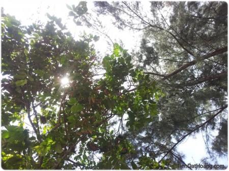 Nằm xuống, ngước nhìn lên các tán cây thì như thế này