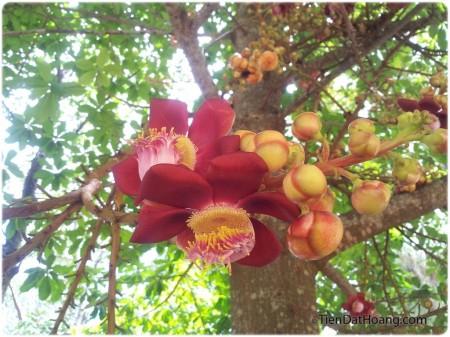 Một loại hoa không biết tên, nhìn rất giống hoa gạo.