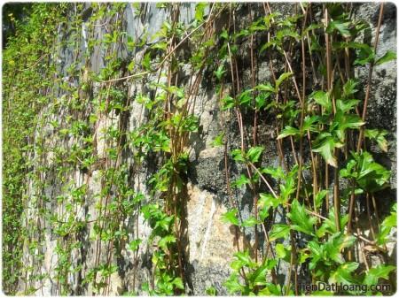 Một góc tường ở khu mộ Hàn Mặc Tử.