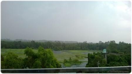 Khung cảnh rừng tràm tại Đài quan sát ở độ cao 15m so với... mặt đất.