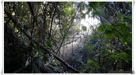 Ánh nắng xuyên qua cây cối rậm rạp ở quanh thác Voi.