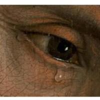 Las lágrimas tardías