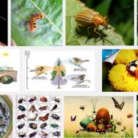 côn trùng tiếng trung