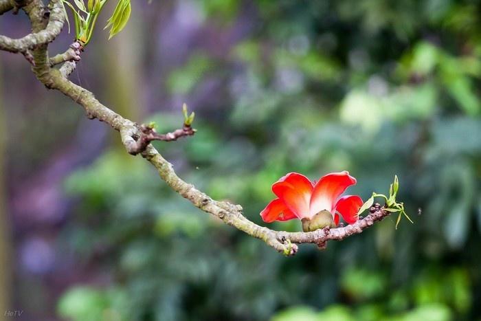 """Thích Nữ Như Hải - Cảm tác về bài thơ  """"NGẮM HOA"""" của Đức Tăng Thống Thích Quảng Độ ngày 09/10/2018."""