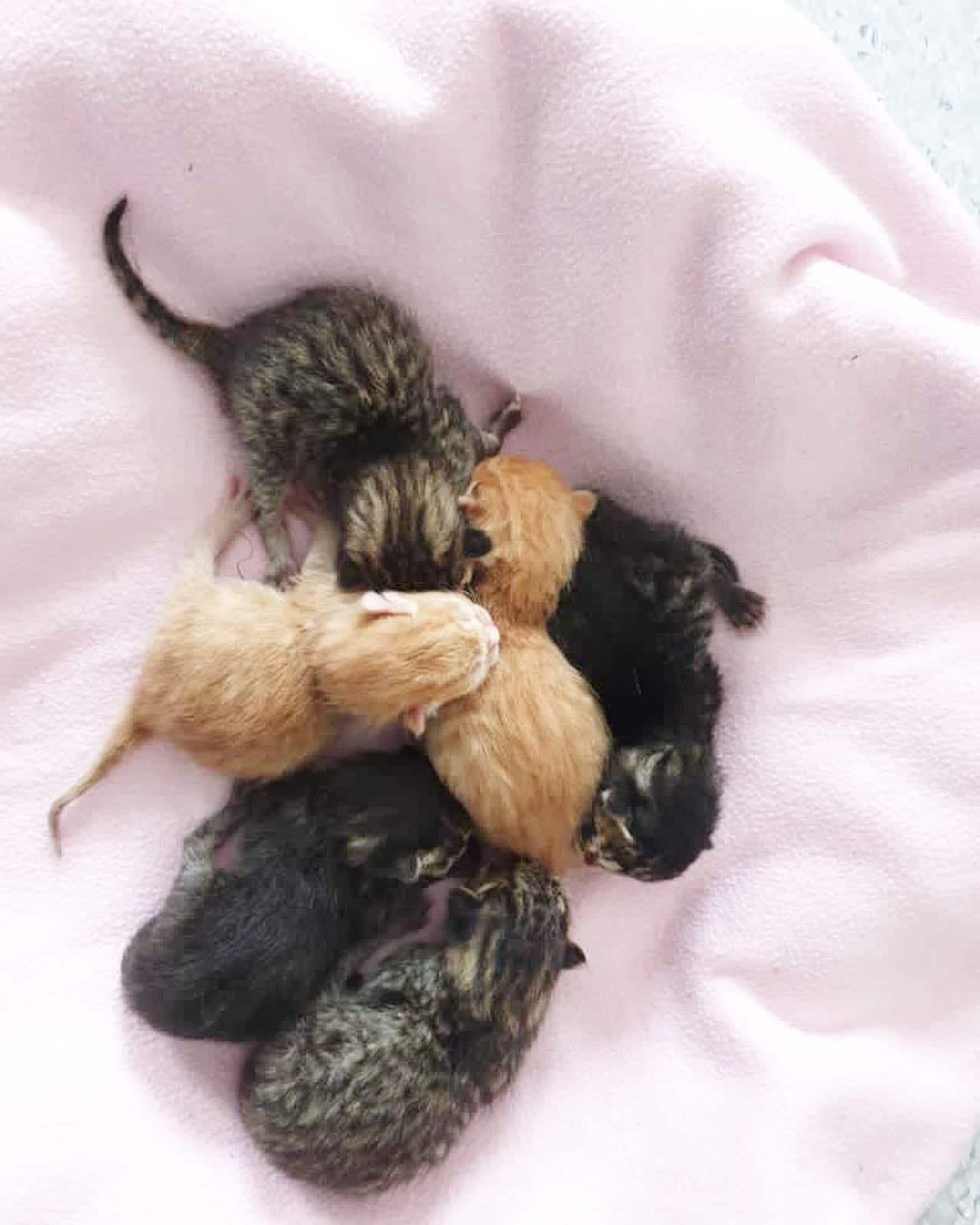 Katzenbaby-Nachwuchs in unserer Tierarztpraxis!