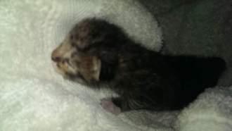 Neugeborenes Katzenbaby