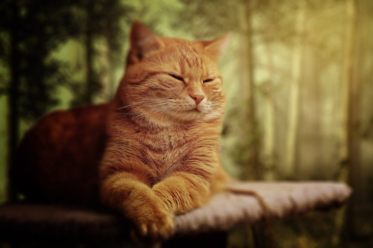 Schlafposition der Katze: Kopf angehoben