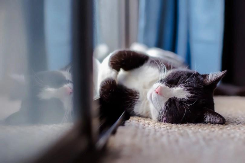 Schlafposition der Katze: angelehnt