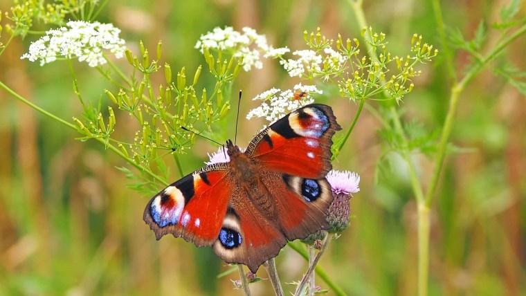 Bienen helfen mit heimischen Wildblumen.