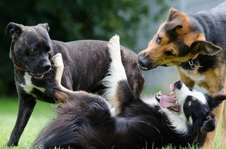 Hund niest beim Spielen