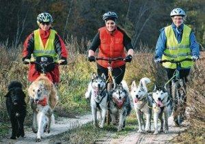 Dogscooter Ausfahrt @ Tierferienhof Eichenhag | Zemitz | Mecklenburg-Vorpommern | Deutschland