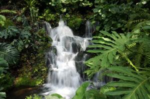 Singapur botanischer Garten (2)