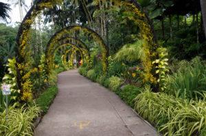 Singapur botanischer Garten (6)