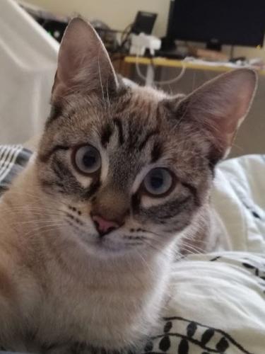 Verspieltes Katzenkind war ihrer Familie zu lebhaft und wurde ins Tierheim abgeschoben. Nun versteht sie die Welt nicht mehr.