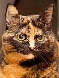 Minka wartet nun schon eine Ewigkeit auf ein eigenes Zuhause, möglichst mit ein bisschen Freigang.