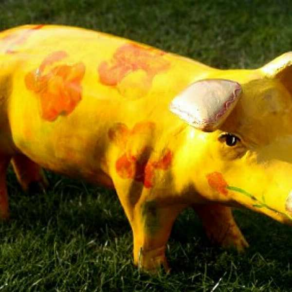 Designer Schwein Orange
