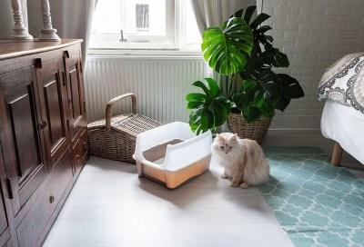 Katzentoilette gibt es in verschiedenen Varianten