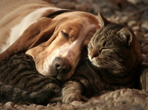 Cat pillow, dog blanket