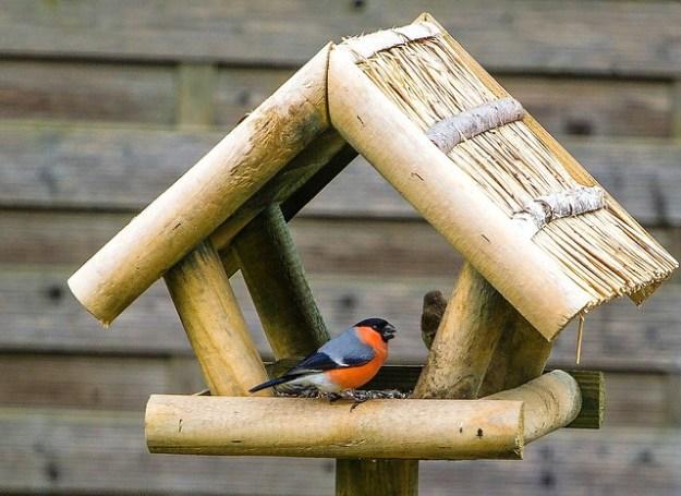 Der Gimpel-Dompfaff ist im Winter ein gern gesehener Gastvogel am Futterhäuschen