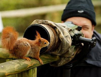 Gar nicht kamerascheu ist das kleine Eichhörchen.