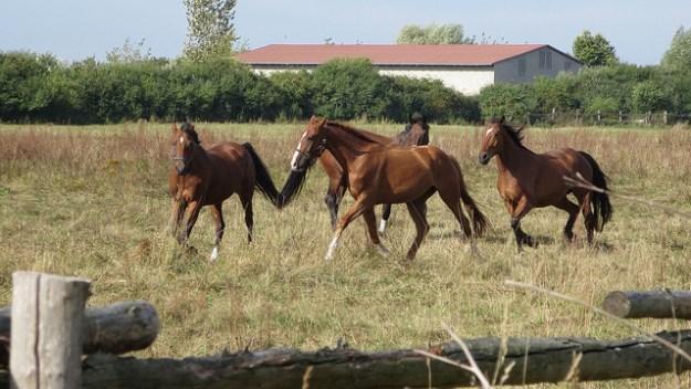 Pferde sind treue Begleiter der Menschen.