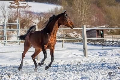 Die Sinneswahrnehmung der Pferde unterscheidet sich deutlich von der des Menschen.