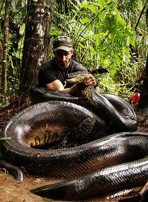 Die größte Anakonda