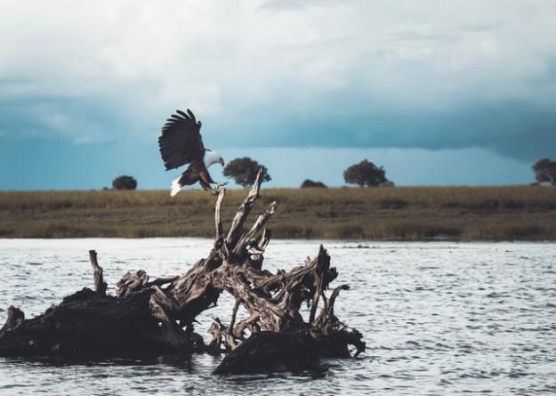 Vögel in Afrika