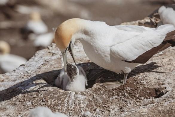 Meeresvögel