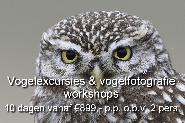 Er worden mooie vogelexcursies georganiseerd en een vogelfotografie workshop