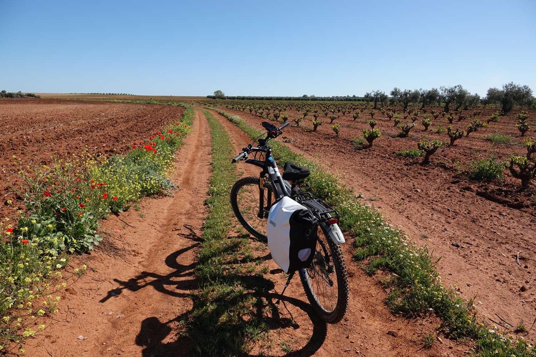Fietsen in Extremadura door wijnstreken en olijfboomgaarden