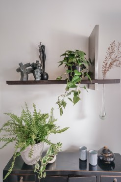Table-top and Shelf Plants